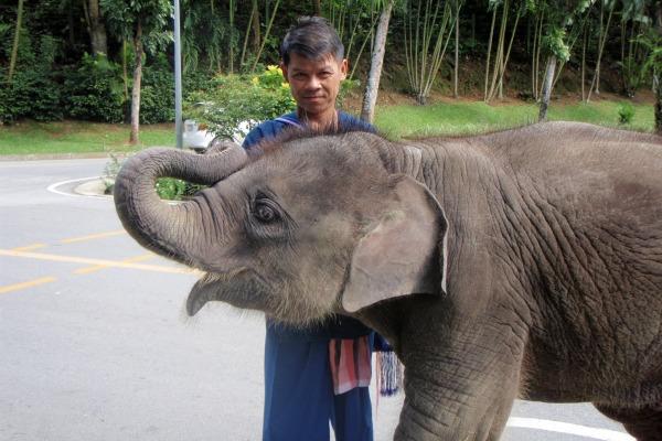 Baby Elephant Thailand