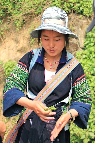 Our Local Hmong Guide